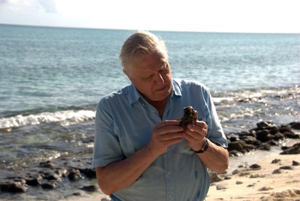 David Attenborough, ein englischer Gentleman in den Achtzigern, steht an einer Meeresküste und schaut andächtig auf einen Schwamm (das Tier) in seinen Händen
