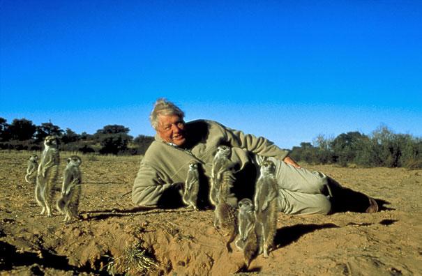 David Attenborough posiert mit einigen Erdmännchen in der Wüste.