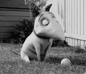 Sparky, der weiße spitznasige Hund sitzt im Garten. Vor ihm liegt ein Baseball auf dem Rasen, den der Hund beäugt.