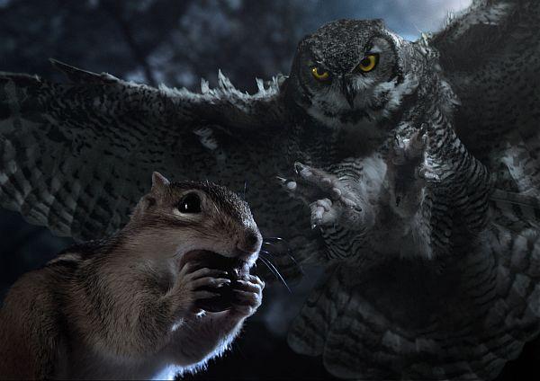 Ein Streifenhörnchen nagt an einer Nuss, im Hintergrund ein Uhu im Beutegreifanflug.