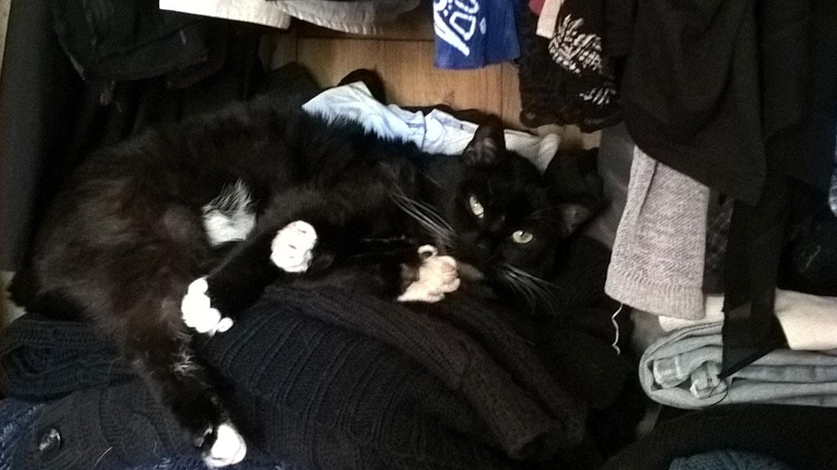 Katze Luz, das Bärchen mit vielen Pfoten. foto: bk