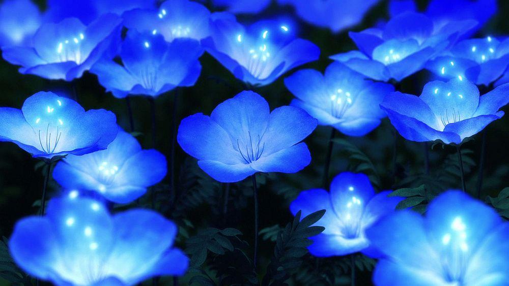 Blaue Blüten blühen leuchtend in der Nacht auf.