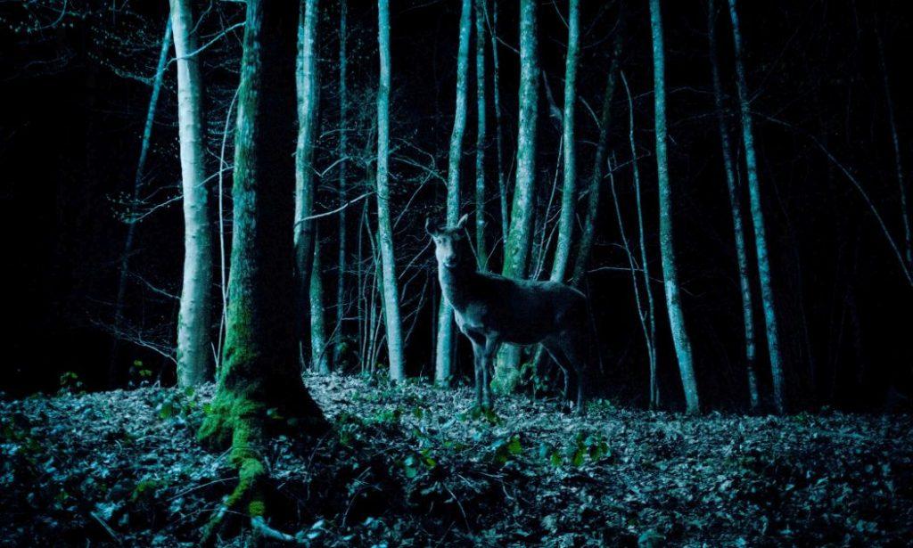 Ein Reh im Wald.